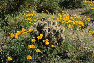 Photograph - Springtime Splendor On The Desert Floor by Lucinda Walter