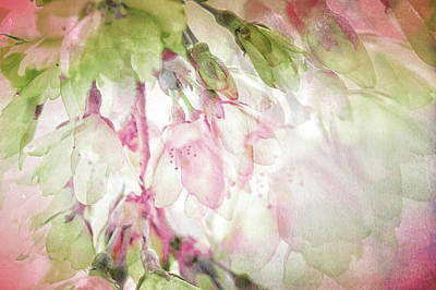 Photograph - Springtime, The Full Essence by Connie Handscomb
