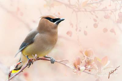 Photograph - Springtime Traveler by Jim Fillpot