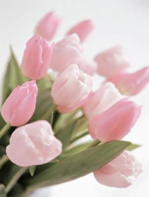 Pastel - Springtime Tulips by Georgiana Romanovna