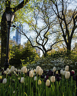 Photograph - Springtime Tulips In Central Park New York City by Toby McGuire