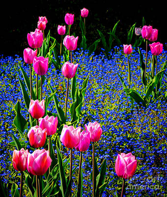 Photograph - Springtime Tulips by Olivier Le Queinec