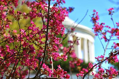 Photograph - Springtime Vibe by Mitch Cat