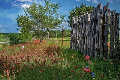 Photograph - Springtime Wildflower Fence by Lynn Bauer