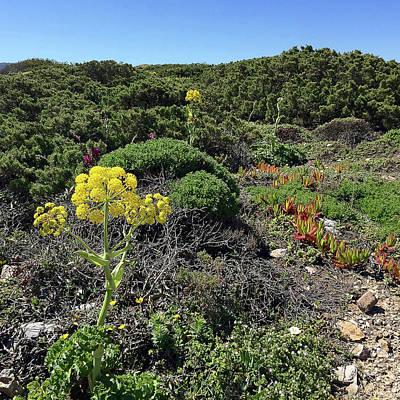 Springtime Wildflowers Along Coastal Hiking Trail - Portugal Art Print by Connie Sue White