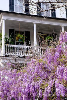 Wisteria In Bloom Photograph - Springtime Wisteria In Bloom by Dawna  Moore Photography