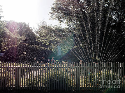 Pink Black Tree Rainbow Photograph - Sprinklers by Rachel Morrison