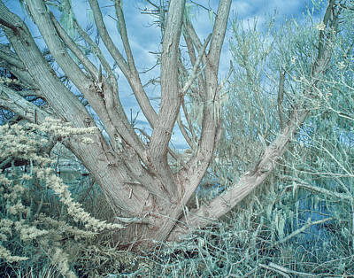 Photograph - Sprouting Branches by Greg Nyquist