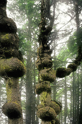 Spruce Burl Olympic National Park Beach 1 Wa Art Print by Christine Till