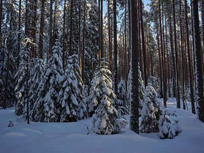 Photograph - Spruce Family by Jouko Lehto
