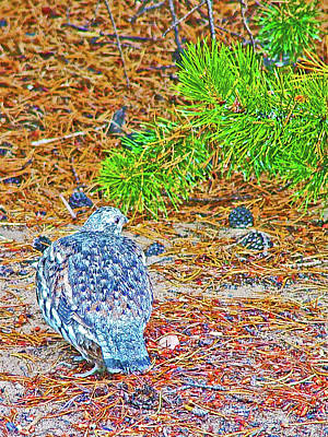 Photograph - Spruce Grouse In Colter Bay Campground In Grand Tetons National Park, Wyoming  by Ruth Hager