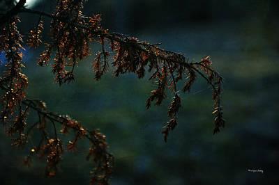 Photograph - Spruce In Sunset by Randi Grace Nilsberg