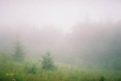 Spruce In The Mist Art Print