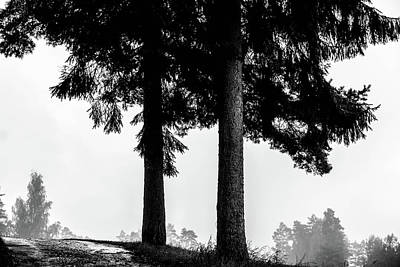 Digital Art - Spruce Trees by Tommytechno Sweden