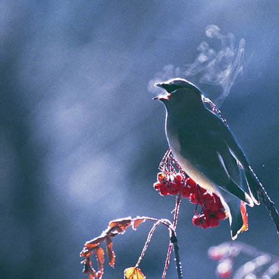 Photograph - Square Birdsong by Scott Wheeler