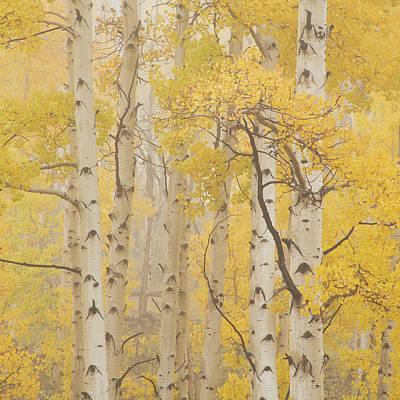 Photograph - Square Format Aspen Mist by Scott Wheeler