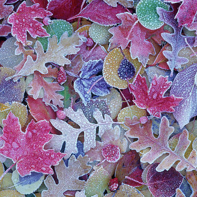 Photograph - Square Frost On Leaves by Scott Wheeler
