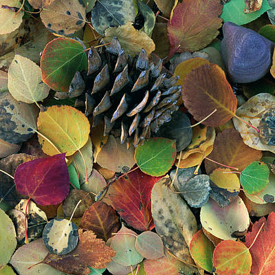 Photograph - Square Leaves by Scott Wheeler