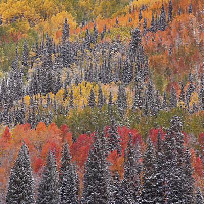 Photograph - Square Psychedelic Autumn by Scott Wheeler
