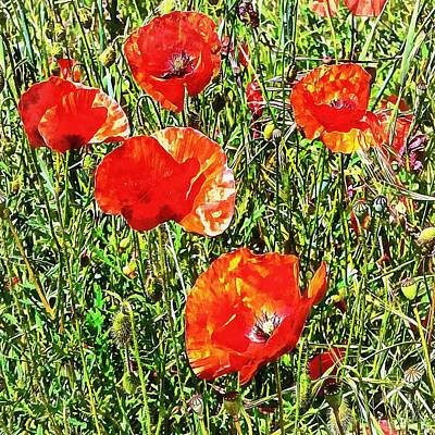 Photograph - Square Red Poppy Capture by Dorothy Berry-Lound