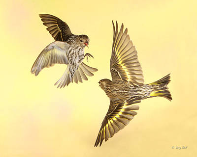 Photograph - Squaring Off by Gerry Sibell