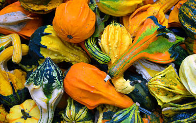 Photograph - Squash A Variety Of by David Lee Thompson