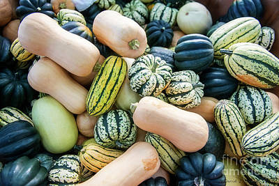 Photograph - Squash by David Arment