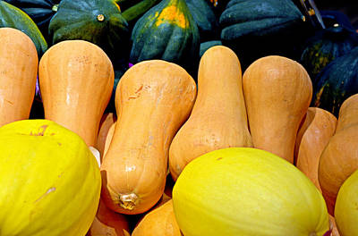 Photograph - Squashes by Robert Meyers-Lussier