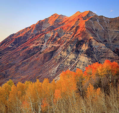 Photograph - Squaw Peak Aspens With Timpanogos. by Johnny Adolphson