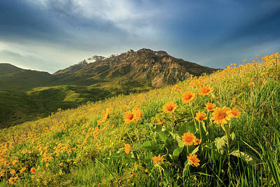 Photograph - Squaw Peak Wildflowers by Johnny Adolphson