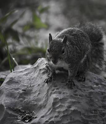 Aloha For Days - Squirrel 3  by Debra Forand