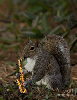 Photograph - Squirrel And His Sax by Sandra Clark
