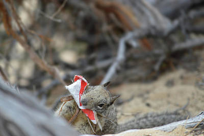 Photograph - Squirrel And His Trash by Brent Dolliver