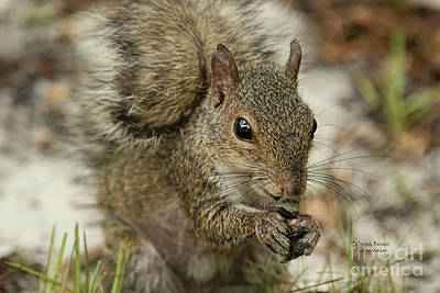 Photograph - Squirrel And Nuts by Deborah Benoit