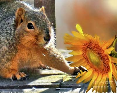 Photograph - Squirrel And Sunflower by Janette Boyd