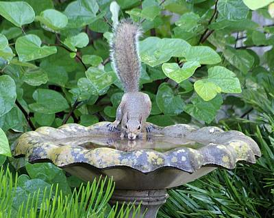Photograph - Squirrel At The Birdbath by Richard Rizzo