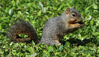 Photograph - Squirrel by Inspirational Photo Creations Audrey Woods
