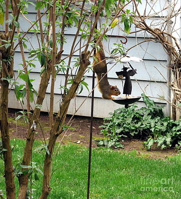 Photograph - Squirrel Bird Feeder by Marlene Rose Besso
