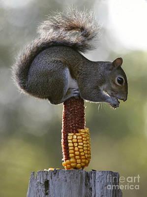 Photograph - Squirrel Buffet by Myrna Bradshaw