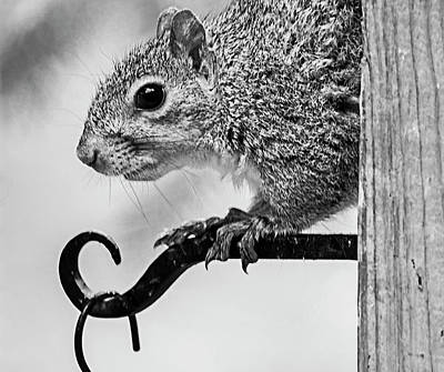 Little Mosters - Squirrel by Cathy Kovarik