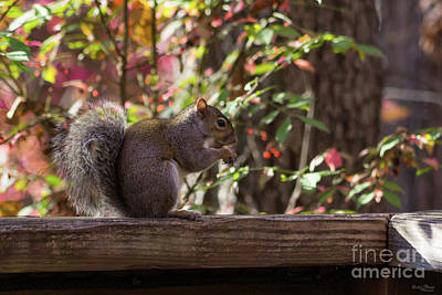 Photograph - Squirrel Chow Time by Jennifer White