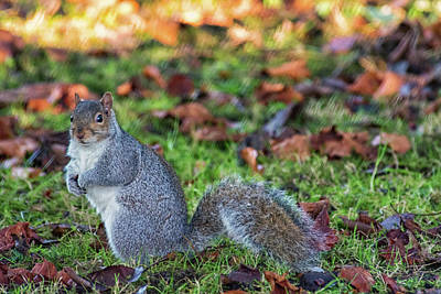 Photograph - Squirrel  by Cliff Norton