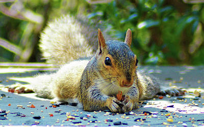 Photograph - Squirrel Closeup by Kathy Kelly