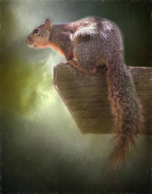 Photograph - Squirrel by David and Carol Kelly