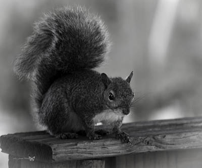 Thomas Kinkade Rights Managed Images - Squirrel  Royalty-Free Image by Debra Forand