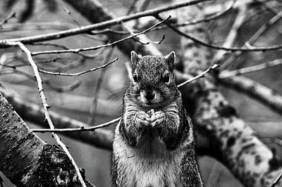 Photograph - Squirrel Eating A Nut by Unsplash