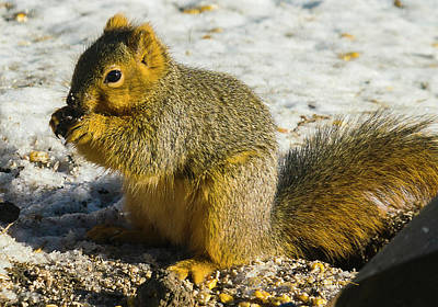 Photograph - Squirrel Feed by Edward Peterson