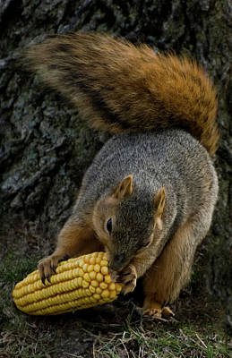 Photograph - Squirrel Feeding by Kathleen Stephens