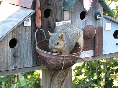 Photograph - Squirrel Feeding by Patricia Barmatz