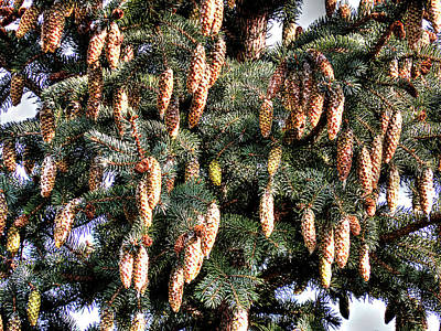 Photograph - Squirrel Food by Leslie Montgomery